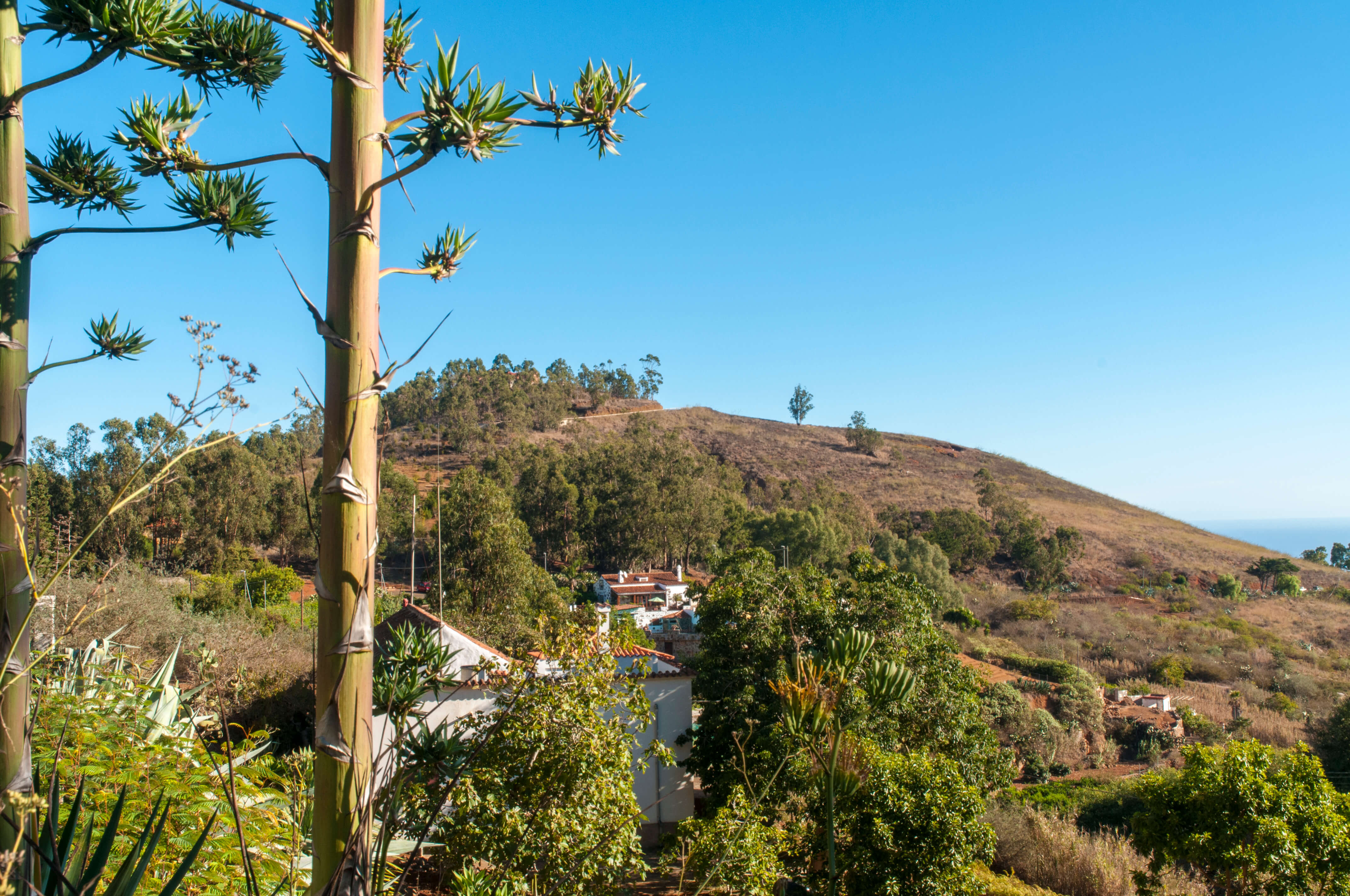 Casa rural con piscina privada en firgas gran canaria for Alquiler casa rural piscina privada